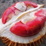 Durian Merah Banyuwangi : Durian Cantik dengan Warna Eksotis
