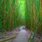 10 Souvenir Bambu untuk Acara Spesial